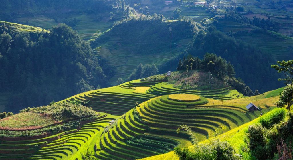 Rice Paddies in Vietnam Destination Weddings Beyond Weddings